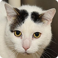 Adopt A Pet :: GUMBO - New Haven, CT