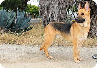German Shepherd Dog Mix Dog for adoption in San Diego, California - Duke
