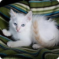 Adopt A Pet :: PHINEAS - Newport Beach, CA