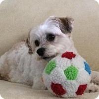 Adopt A Pet :: Jasmine - Naples, FL