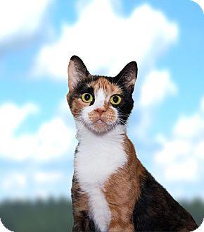Domestic Shorthair Cat for adoption in Seville, Ohio - Pretty girl