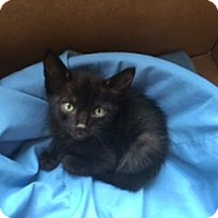 Adopt A Pet :: A398620 - San Antonio, TX