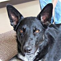 Adopt A Pet :: Shiloh - Yreka, CA