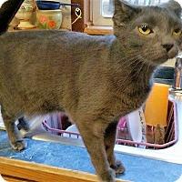 Adopt A Pet :: Maddie & Skyler - Germantown, MD
