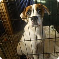 Adopt A Pet :: Sunni - Glastonbury, CT