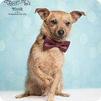 Adopt A Pet :: Hook - Chandler, AZ