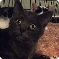 Adopt A Pet :: Rachel - Breinigsville, PA