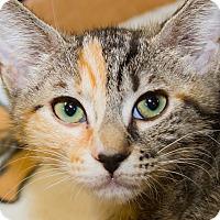 Adopt A Pet :: Bea - Irvine, CA