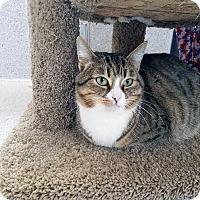 Adopt A Pet :: Mirasou - Mountain Center, CA