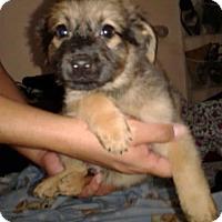 Adopt A Pet :: Skylar - Dana Point, CA
