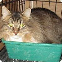 Adopt A Pet :: FancyBoots - detroit, MI