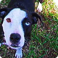 Adopt A Pet :: Carly - Von Ormy, TX