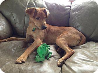 Labrador Retriever Mix Dog for adoption in Hancock, Michigan - Marcus!