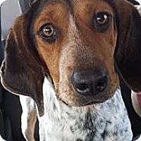 Adopt A Pet :: Ramona - St, Augustine, FL
