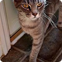 Adopt A Pet :: Daphne - Xenia, OH