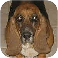Adopt A Pet :: Bullah - Phoenix, AZ