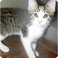 Adopt A Pet :: Brutus - Xenia, OH