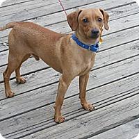 Adopt A Pet :: Richy - Toledo, OH