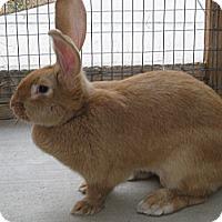 Adopt A Pet :: Savannah - Bonita, CA