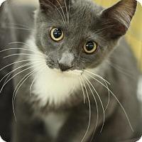 Adopt A Pet :: Curly - Sacramento, CA