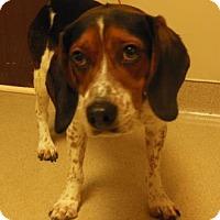 Adopt A Pet :: Grant - Gary, IN