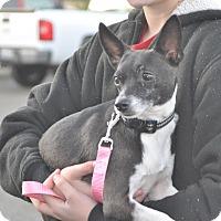 Adopt A Pet :: Jujubee - Tumwater, WA
