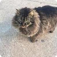 Adopt A Pet :: Twinky - Medford, NJ