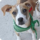 Adopt A Pet :: Tuesday