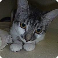 Adopt A Pet :: Sunny - Hamburg, NY