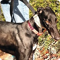 Adopt A Pet :: Dusty - Spencerville, MD