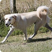 Adopt A Pet :: Dillinger  *Adopted! - Tulsa, OK