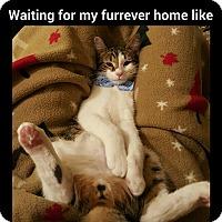 Adopt A Pet :: Stewart - San Fernando Valley, CA