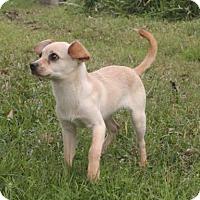 Adopt A Pet :: Suds *video - Sugarland, TX
