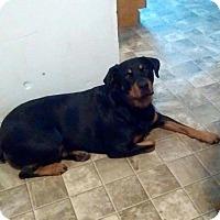 Adopt A Pet :: Sierra - Rexford, NY