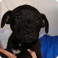 Adopt A Pet :: Scott - Oviedo, FL