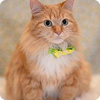 Adopt A Pet :: Candy - Tega Cay, SC