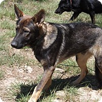 Adopt A Pet :: Max123 - Citrus Springs, FL