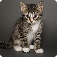 Adopt A Pet :: Jerry - Jersey City, NJ