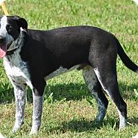 Adopt A Pet :: Riley - Red Oak, IA