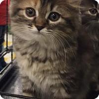 Adopt A Pet :: Mozelle - Ortonville, MI