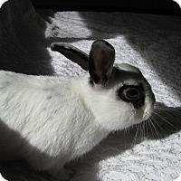 Adopt A Pet :: Peetie - Warren, MI