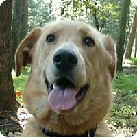 Adopt A Pet :: Macey - Capon Bridge, WV