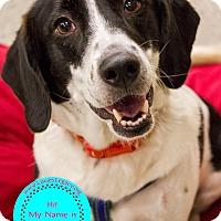Adopt A Pet :: Queenie - Staten Island, NY