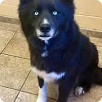 Adopt A Pet :: Loki 111156 - Joplin, MO