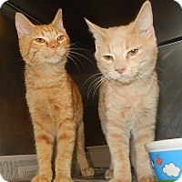 Domestic Shorthair Cat for adoption in Newport, North Carolina - Alexander and Nicholas