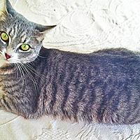 Adopt A Pet :: Annie - Youngsville, NC