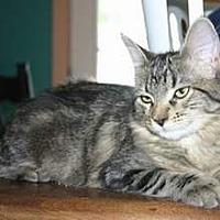 Adopt A Pet :: NV - Kayla (MCR) - Phoenix, NJ