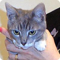 Adopt A Pet :: Ivy - Wildomar, CA