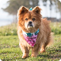 Adopt A Pet :: Charley - Pacific Grove, CA