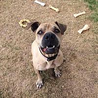 Adopt A Pet :: Phoebe - Peoria, AZ